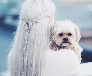 hair, dog, and cute image