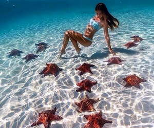 beach, paradise, and underwater image