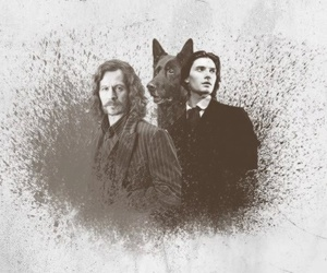 sirius black and padfoot image