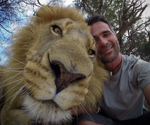 lion, animal, and selfie image