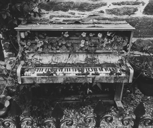 piano, flowers, and black and white image