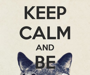 cat, keep calm, and cool image