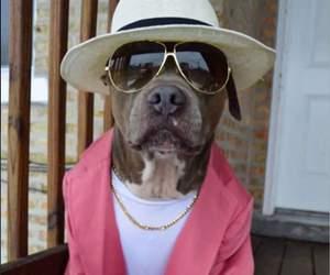 dog and bruno mars image