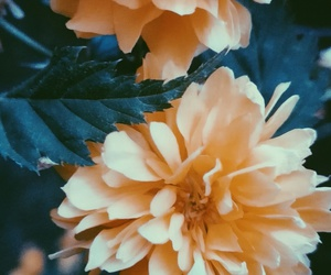 beautiful, flowers, and old image