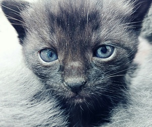 beautiful, blue eyes, and little cats image