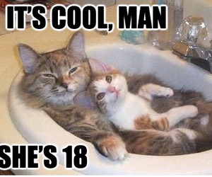 funny, cat, and cool image