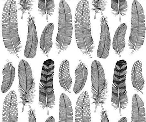 feather and black and white image