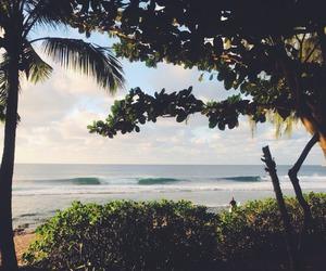 beach, bush, and palm image