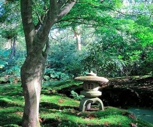 bonsai, culture, and japan image