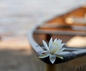 beach, boat, and flower image