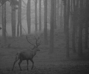 animals, black and white, and deer image