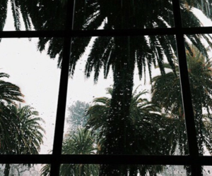 rain and tropical image