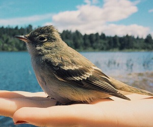 bird, environment, and freedom image