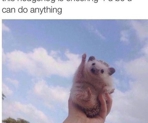 cute, hedgehog, and funny image