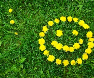 flowers, smile, and smiley image