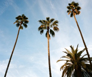adventure, palms, and photography image