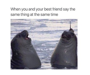 funny, friends, and lol image