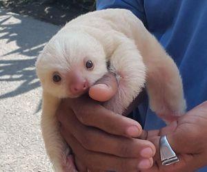 animal and sloth image