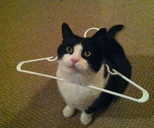 cat, funny, and human image