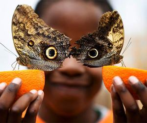 butterfly, eyes, and creative image