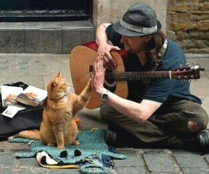 animal, friendship, and musician image