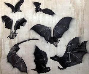 animal, art, and flight image