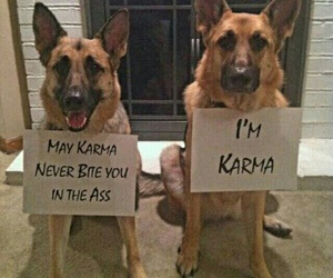 dog, karma, and funny image