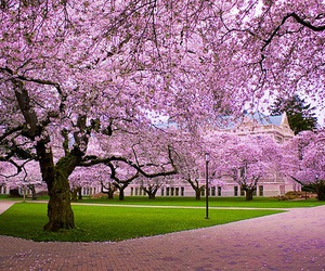 Image by •Pink Palace•