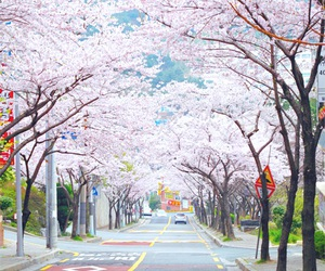 japan, place, and street image