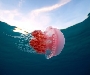 awesome, hd, and jellyfish image