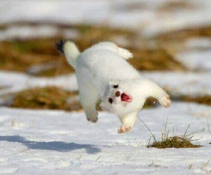 animal, funny, and snow image