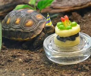 cake, tortoise, and cute image