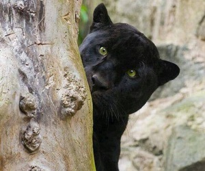 black, hiding, and Powerful image