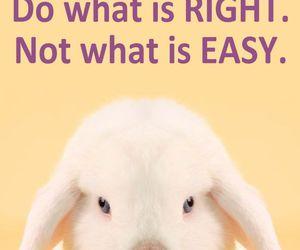 animal rights, animal testing, and cosmetics image