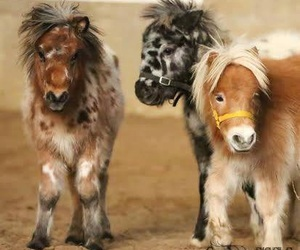 horse, cute, and pony image