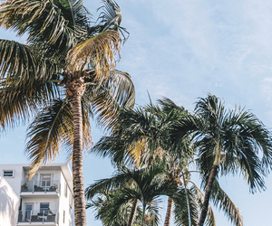 adventure, nature, and palms image