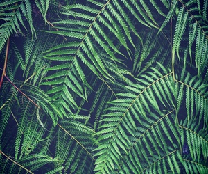 natur, nature, and palm leaves image