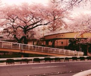 bridge, pink, and sakura image
