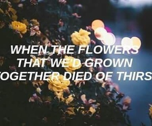clean, flowers, and Taylor Swift image