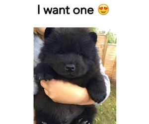 black, cute, and bear image