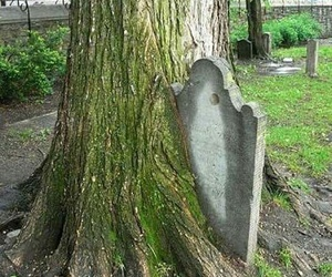funny, grave, and tree image