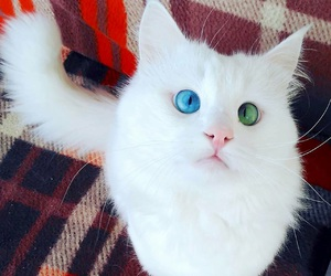 cat, white, and chat image