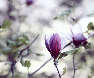 april, bloom, and bokeh image