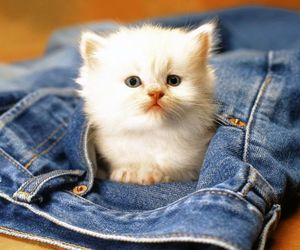 cat, jeans, and kitten image