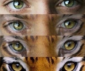 eyes, supernatural, and tiger image