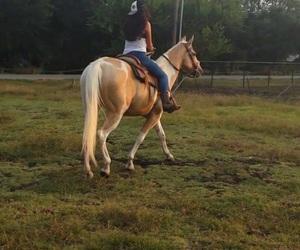 feliz, happy, and horses image