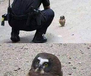 funny, owl, and cute image