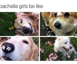 funny, coachella, and dog image