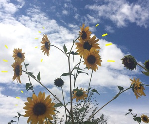 sky and sunflower image