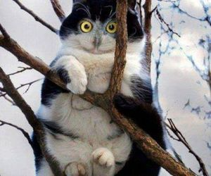 funny, cat, and owl image